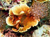 picture of cebu  - Underwater inhabitants of sea depths of strait Cebu, island Maktan, stone coral ** Note: Slight blurriness, best at smaller sizes - JPG