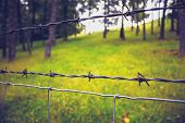 Close Up On Barb Wire With Trees In Background