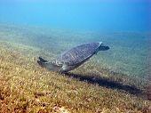 Turtle crash landing