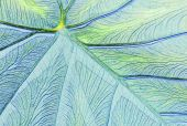 Leaf close-up in pastels