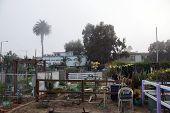 Community Garden In  Santa Monica, California