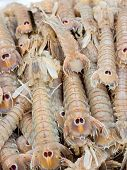 Cicale di mare - Small European locust lobsters