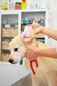 Vet examining puppy dog
