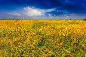 picture of steppes  - Summer meadow in steppe - JPG