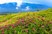 Wild flowers on mountains meadow. Crimea, Ukraine