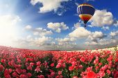 Boundless fields with blossoming pink buttercups. Over fields the huge multi-color balloon flies. Spring in the south