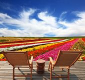 Very beautiful bright multi-colored flower fields. On the edge of a field convenient wooden chaise l