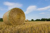 Landscape And Hay Bale