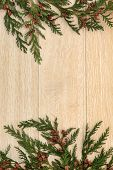 Cedar cypress leyland leaf sprigs with pine cones over light oak background.