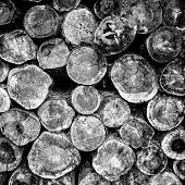stock photo of dick  - Black and white imgae of stacked round and thick logs.