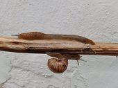 Snail down slug up