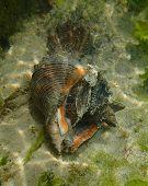Predator snail