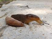 Two slugs