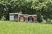 Wooden Beehives On Meadow