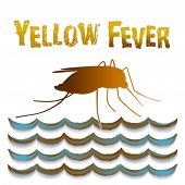 Yellow Fever Mosquito, Standing Water