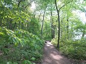 image of starving  - Sunlight Shadows and beautiful spring time tree growth at Starved Rock State Park - JPG