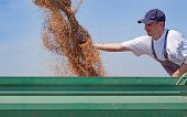Young farmer checks his wheat flow while combine harvester unloads wheat into tractor trailer.