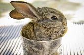 stock photo of glass-wool  - Grey bunny in a glass on the table - JPG