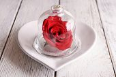 Red rose in bell jar on plate, on table background