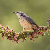 Nuthatch Flower Hold
