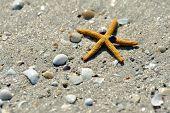 starfish ans seashells on wet  sand