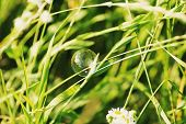 Soap Bubble On A Grass