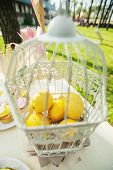 Lemon In A Cage
