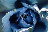 Two Wedding Rings On Blue Cabbage