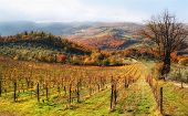 Autumn In Chianti Hills