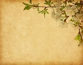 Beige paper background with cherry blossom.