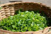 juicy greenery