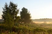 pic of creeping  - August morning - JPG