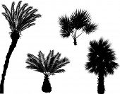illustration with palm trees silhouettes isolated on white background