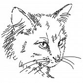 Sketch of cat head, Hand drawn illustration Vector, Isolated
