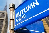 Autumn Ahead blue road sign