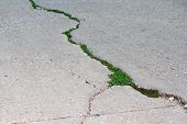Plants Trying To Grow in Concrete Crack