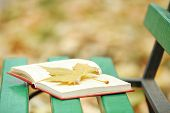 Open book with leaf on it lying on the bench in autumn park