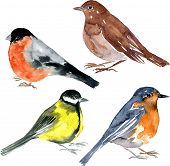 stock photo of nightingale  - set of watercolor drawing birds - JPG