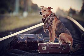 stock photo of dog-house  - Dog on rails with suitcases - JPG