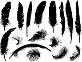 pic of feathers  - illustration with sixteen black feathers isolated on white background - JPG