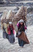 Tibetan Womans With Basket