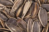 picture of sunflower-seeds  - Sunflower seeds close up - JPG