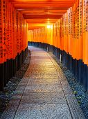 image of inari  - Torii gates in Fushimi Inari Shrine Kyoto Japan - JPG