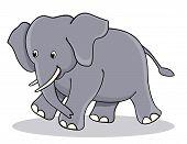 Постер, плакат: Cute Baby Elephant