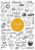picture of pecan nut  - Big doodle set  - JPG
