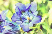 pic of trumpet flower  - watercolor illustration of trumpet gentiana blue spring flower in garden in vintage color tone - JPG