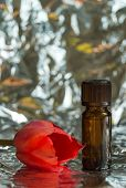 picture of perfume  - One floral perfume bottle and red tulip - JPG