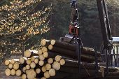 image of skidder  - loading harvested timber in the forest on a sunny day - JPG