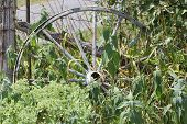 image of wagon wheel  - Old wooden wagon wheel - JPG