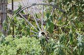 stock photo of wagon wheel  - Old wooden wagon wheel - JPG